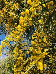 春の花は桜だけじゃない。咲いてるだけでオシャレな春の花